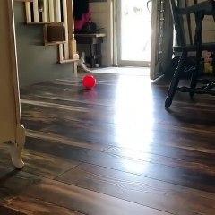 Le handicap n'est pas un obstacle, en voici la preuve avec cet adorable chat !