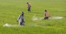 Le glyphosate et deux autres pesticides dangereux ne seront plus utilisés en Thaïlande à partir du 1er décembre