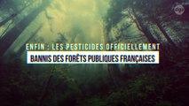 Enfin : les pesticides officiellement bannis des forêts publiques françaises