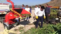 Muğla bahçe atıklarıyla mücadelede bodrum'da yeni dönem