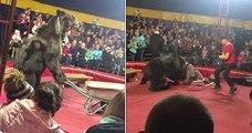 Un ours exploité dans un cirque se rebelle contre un dresseur en plein spectacle, avant de subir un choc électrique