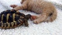 Tortuga muerde la pata de gato mientras éste ni se inmuta