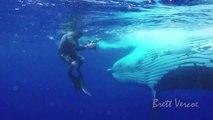 Ces plongeurs nagent au plus près des baleines... Magnifique