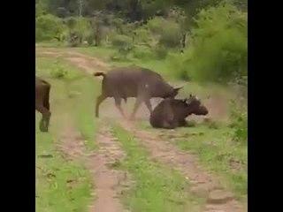 Bualli triufon ndaj luanit