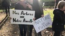 Manifestation pour sauver les arbres de la rue Prémartine au Mans