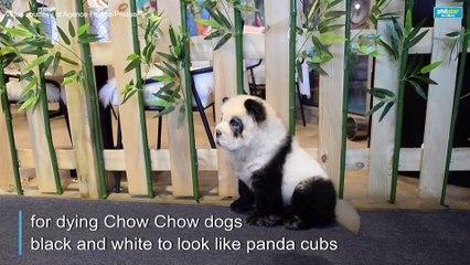 'Panda dog' cafe sparks China animal rights debate