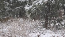 Winter arrived early for Chautauqua Park