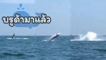 โมเมนต์น่าตื่นตา วาฬบรูด้า อวดโฉมนักท่องเที่ยว