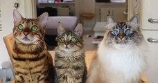 Missenell, cette famille de chats qui ne fait rien comme les autres