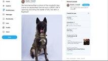 O cão 'herói'