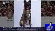 Ce chien, érigé en héros par Donald Trump, a participé à la traque d'Abou Bakr Al-Baghdadi