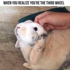 Tellement chou; ce lapin fera votre journée !