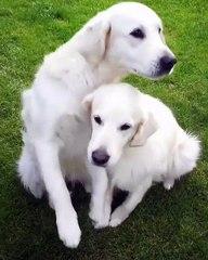 Notre cœur s'emplit tant de plaisir devant la complicité et le bonheur de ces deux chiens qu'il en devient trop grand pour tenir dans notre corps.
