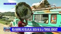 Mga mamimili ng bulaklak, dagsa na sa La Trinidad, Benguet