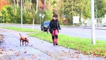 Déjections animales : l'énergie verte de la Finlande