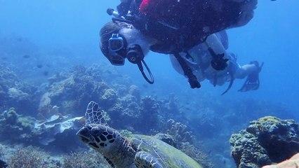 November Sea Hero Helps Protect Sea Turtles