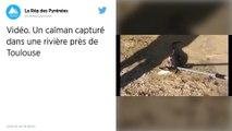 Un caïman capturé par les pompiers dans une rivière près de Toulouse