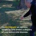 Troupeau attaqué, but de Payet, manifestation à Toulon: voici votre brief info de ce jeudi après-midi