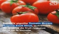 Virus de la tomate : c'est quoi ce nouveau virus ?