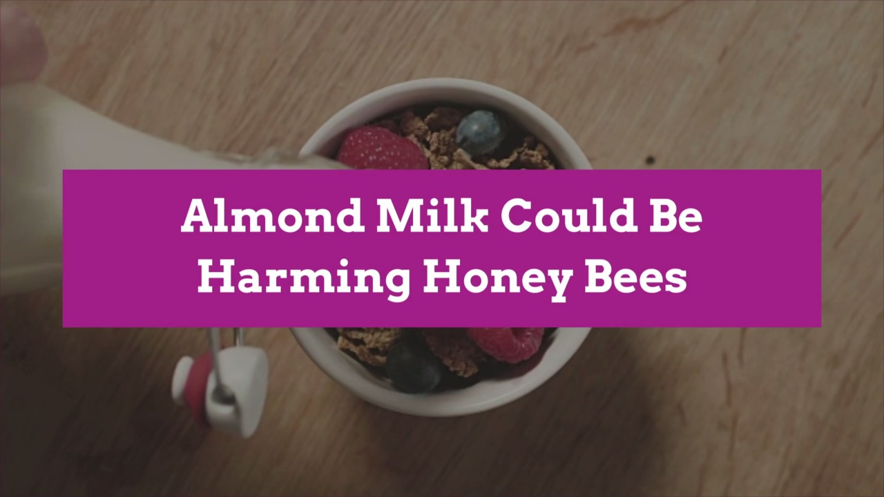 Almond Milk Could Be Harming Honey Bees
