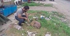 Cette chienne enceinte serait morte si cet homme ne l'avait pas recueillie dans son refuge