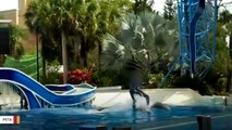 SeaWorld To Stop 'Dolphin Surfing' At Theme Parks