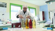"""""""L'idée c'est de sortir le cidre de la crêpe"""" : les maîtres de chai bretons se tournent vers l'export"""