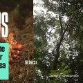 Le boycott de l'huile de palme est-il pire pour l'environnement que sa culture actuelle ?