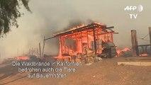 Brände in Kalifornien bedrohen Tiere auf Bauernhöfen
