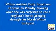 Un cheval s'évade et saute dans une piscine