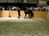 Salon du cinéma, cascades avec chevaux