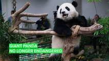 Pandas are lucky they're so f*cking cute