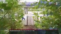 Pays-Bas : des mini-forêts implantées en ville