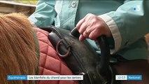 Équithérapie : les bienfaits du cheval pour les séniors