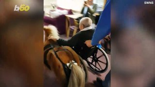 Must See: Cute Video of Pony Playing with Assistant Living Residents