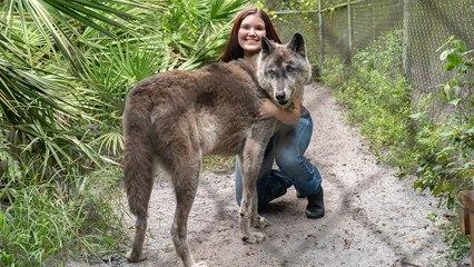 Giant Wolf Dog Yuki Fights Cancer | BIG DOGZ
