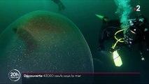Norvège : un œuf de calamar géant découvert dans les eaux d'un fjord