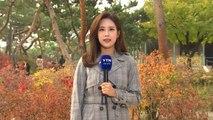 [날씨] 주말, 서쪽 미세먼지↑...단풍 가득한 고궁 / YTN