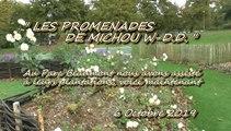 LES PROMENADES DE MICHOU W-D.D. - 6 OCTOBRE 2019 - PAU - PROMENADE DOMINICALE POUR ADMIRER LE FLEURISSEMENT DU JARDIN SENSORIEL DU PARC BEAUMONT.