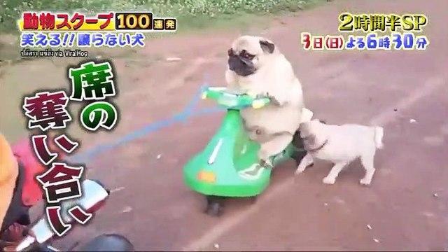 笑える!泣ける!動物スクープ100連発☆明日(日)18時30分~奇跡の救出SP - 19.11.02