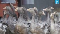 Foie gras naturel :  « Nous n'avons plus recours au gavage » des animaux