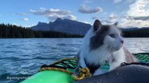 Ce chat vit des aventures dans le monde entier !