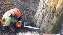 Amazing Cutting Big Tree Whit Small Chainsaw Machines - Skills Tree Felling Woodcutter Turbo Machine
