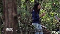 Comment la déforestation de l'Amazonie peut affecter le climat en France