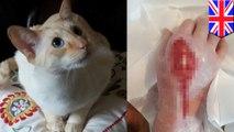 Dicakar kucing, wanita hampir meninggal karena infeksi - TomoNews