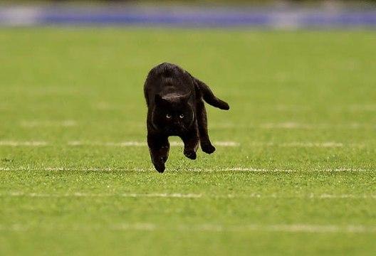 Black cat interrupts Monday Night Football broadcast
