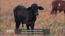 Pourquoi cet éleveur brésilien va continuer à mettre le feu à la forêt amazonienne