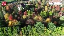 İstanbul ormanları sonbaharın renklerine büründü