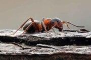 L'évolution incroyable du comportement de fourmis enfermées dans un bunker depuis des années