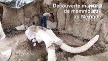 Découverte majeure de restes de mammouths au Mexique